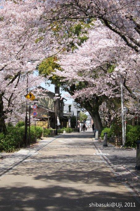 20110412_Kyoto-105_宇治_1.JPG