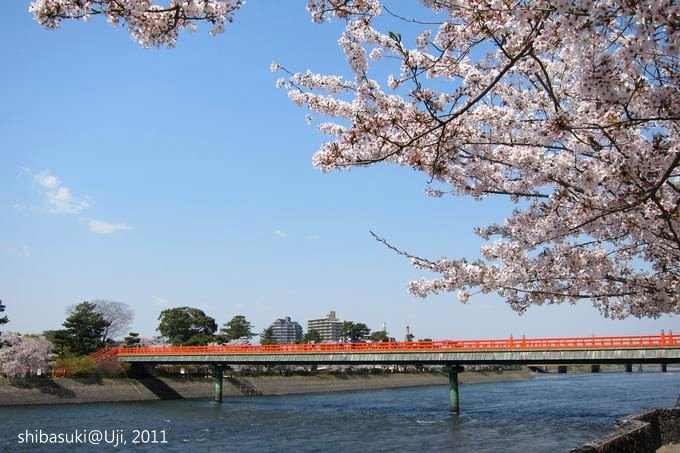 20110412_Kyoto-117_宇治 朝霧橋_1.JPG