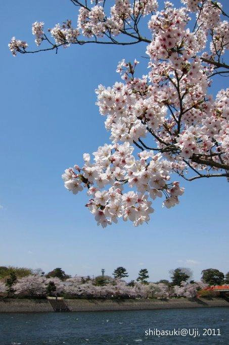 20110412_Kyoto-126_宇治_1.JPG