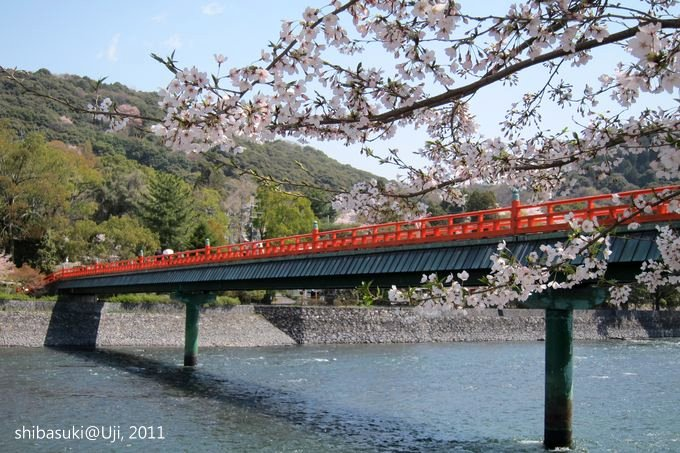 20110412_Kyoto-133_宇治 朝霧橋_1.JPG