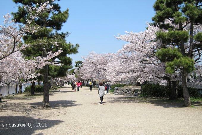 20110412_Kyoto-136_宇治 中之島_1.JPG
