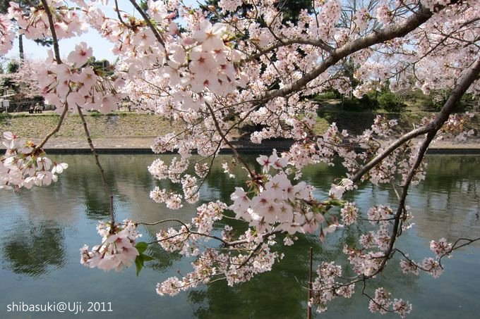 20110412_Kyoto-139_宇治 中之島_1.JPG