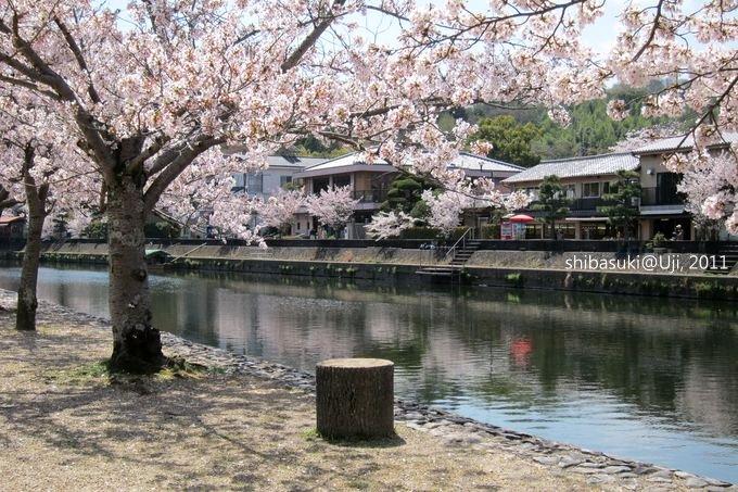 20110412_Kyoto-143_宇治 中之島_1.JPG