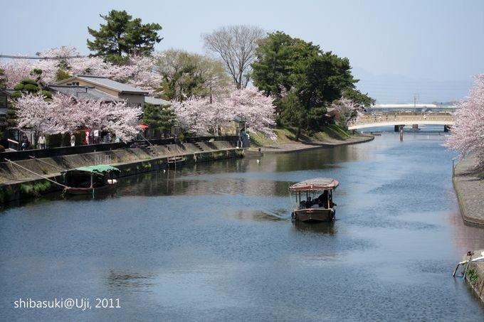 20110412_Kyoto-155_宇治 中之島_1.JPG