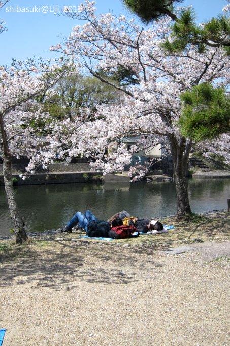 20110412_Kyoto-161_宇治 中之島_1.JPG