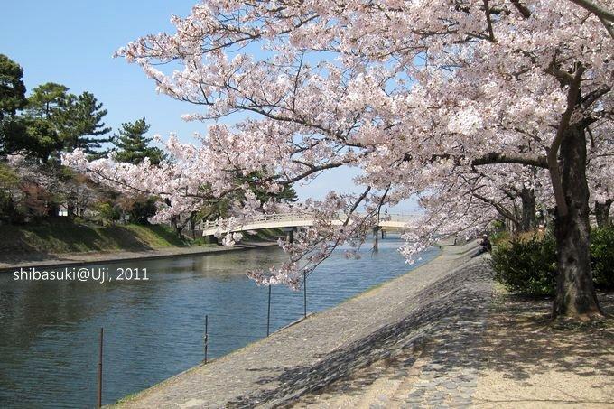 20110412_Kyoto-165_宇治 橘橋_1.JPG