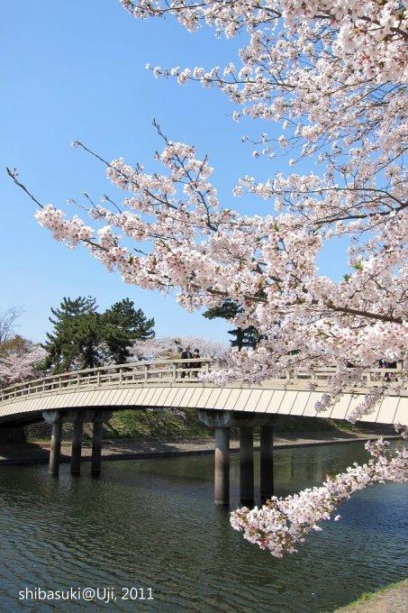 20110412_Kyoto-172_宇治 橘橋_1.JPG