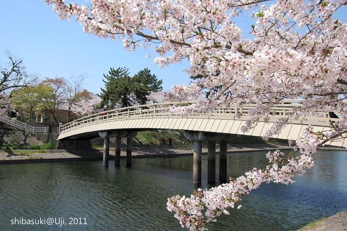 20110412_Kyoto-174_宇治 橘橋_1.JPG