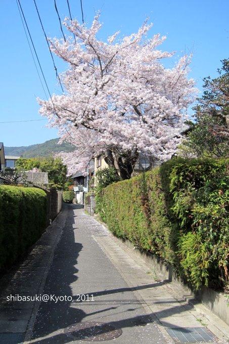 20110412_Kyoto-224_山科_1.JPG