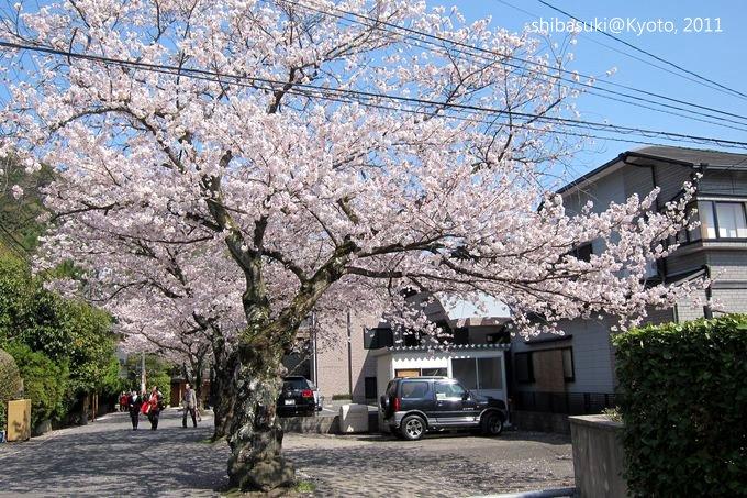 20110412_Kyoto-225_山科_1.JPG
