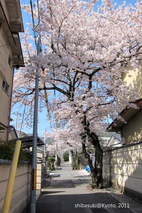 20110412_Kyoto-226_山科_1.JPG