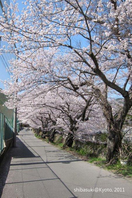 20110412_Kyoto-232_山科 洛東高等學校_1.JPG