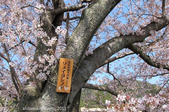 20110412_Kyoto-234_山科 洛東高等學校_1.JPG