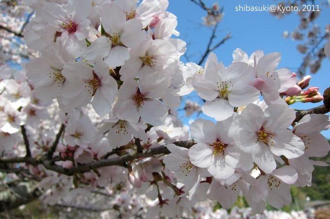 20110412_Kyoto-235_山科 洛東高等學校_1.JPG