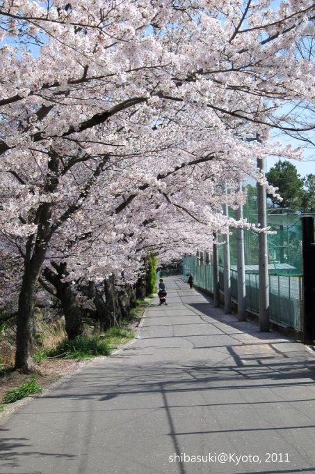 20110412_Kyoto-237_山科 洛東高等學校_1.JPG