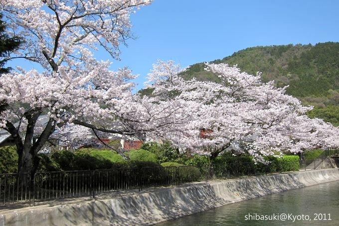 20110412_Kyoto-238_山科疏水道_1.JPG