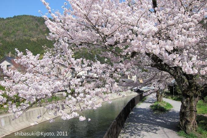20110412_Kyoto-243_山科疏水道_1.JPG