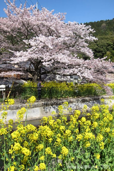 20110412_Kyoto-246_山科疏水道_1.JPG