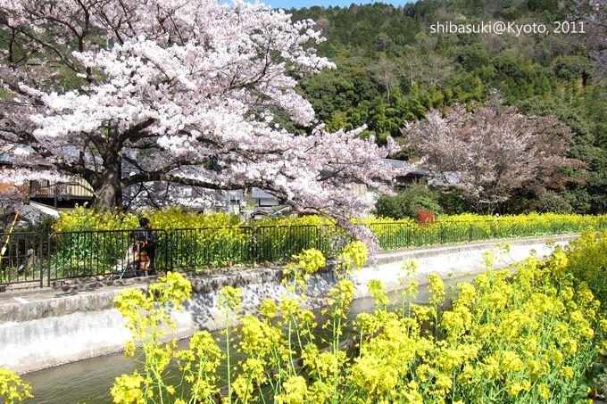20110412_Kyoto-247_山科疏水道_1.JPG
