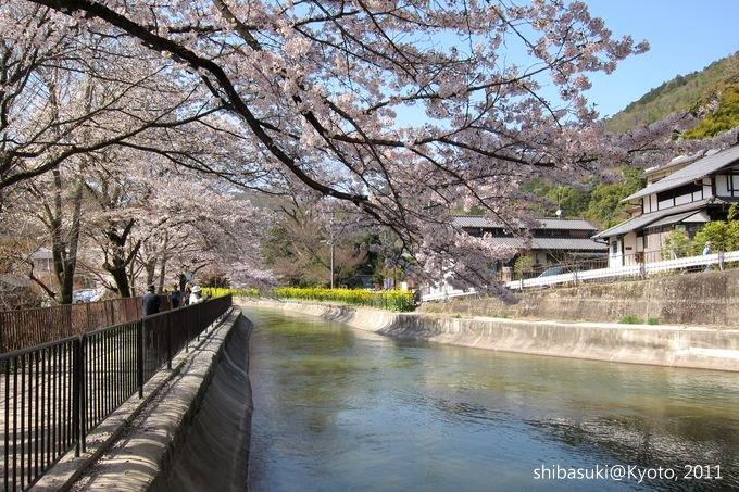 20110412_Kyoto-248_山科疏水道_1.JPG