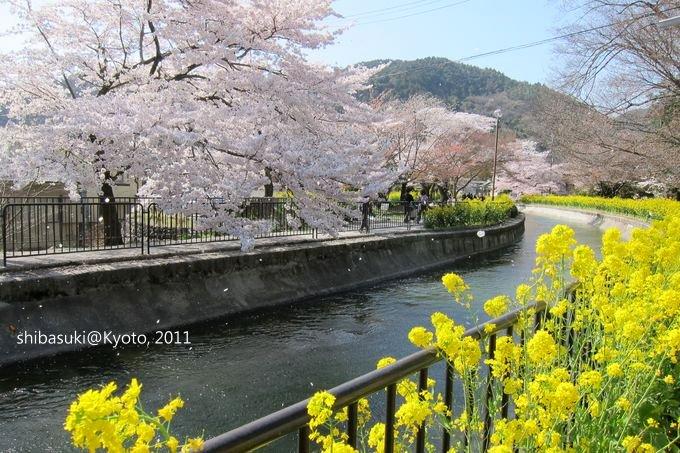 20110412_Kyoto-252_山科疏水道_1.JPG