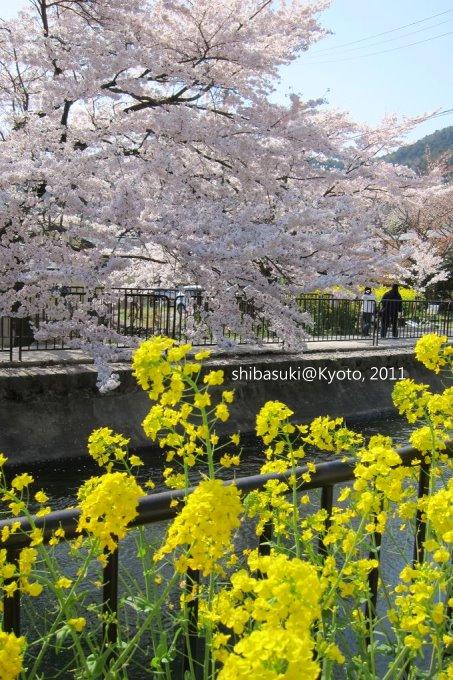 20110412_Kyoto-254_山科疏水道_1.JPG