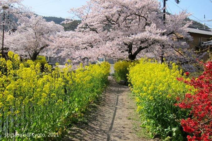 20110412_Kyoto-256_山科疏水道_1.JPG
