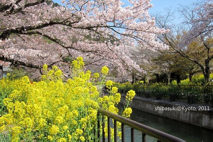 20110412_Kyoto-265_山科疏水道_1.JPG