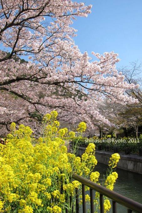 20110412_Kyoto-266_山科疏水道_1.JPG