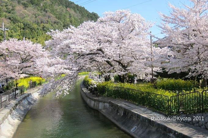 20110412_Kyoto-279_山科疏水道_1.JPG