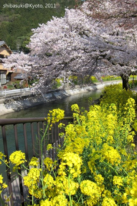20110412_Kyoto-282_山科疏水道_1.JPG