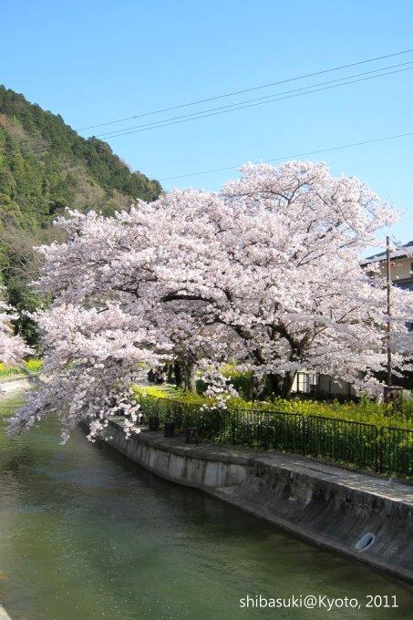 20110412_Kyoto-291_山科疏水道_1.JPG