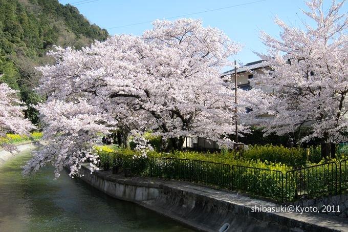 20110412_Kyoto-292_山科疏水道_1.JPG