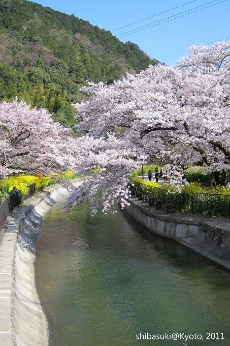 20110412_Kyoto-298_山科疏水道_1.JPG