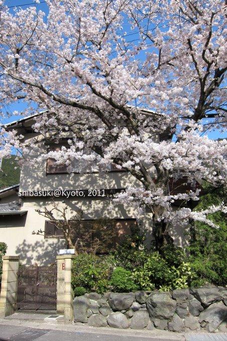 20110412_Kyoto-307_山科_1.JPG