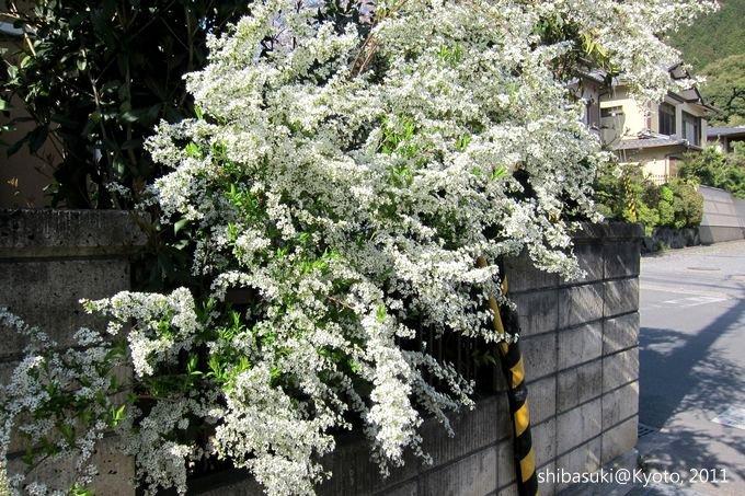 20110412_Kyoto-308_山科_1.JPG