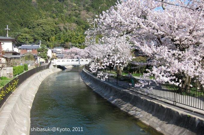 20110412_Kyoto-309_山科疏水道_1.JPG