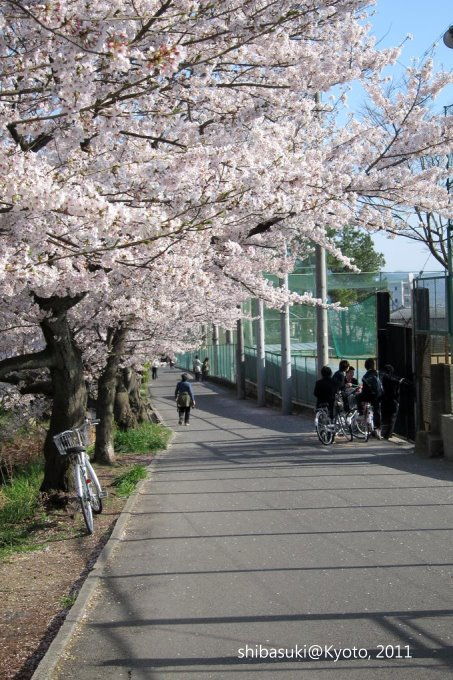 20110412_Kyoto-317_山科 洛東高等學校_1.JPG