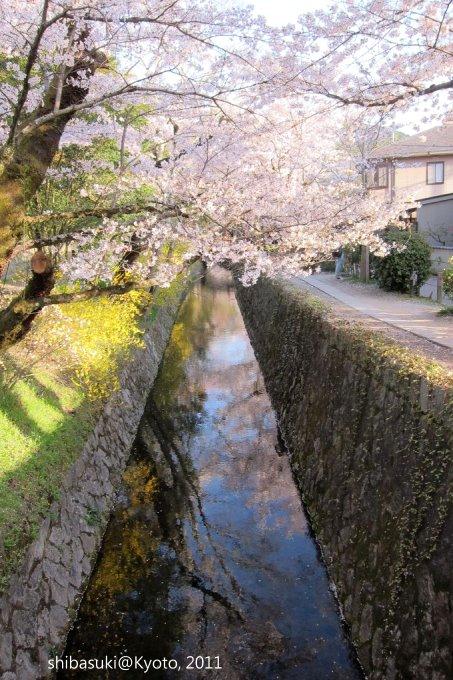 20110412_Kyoto-326_哲學之道_1.JPG