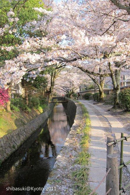 20110412_Kyoto-332_哲學之道_1.JPG