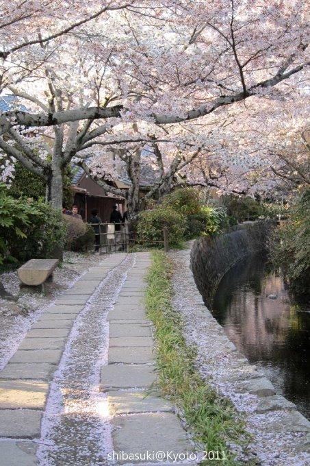 20110412_Kyoto-334_哲學之道_1.JPG