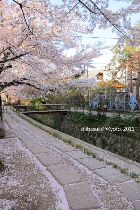 20110412_Kyoto-337_哲學之道_1.JPG