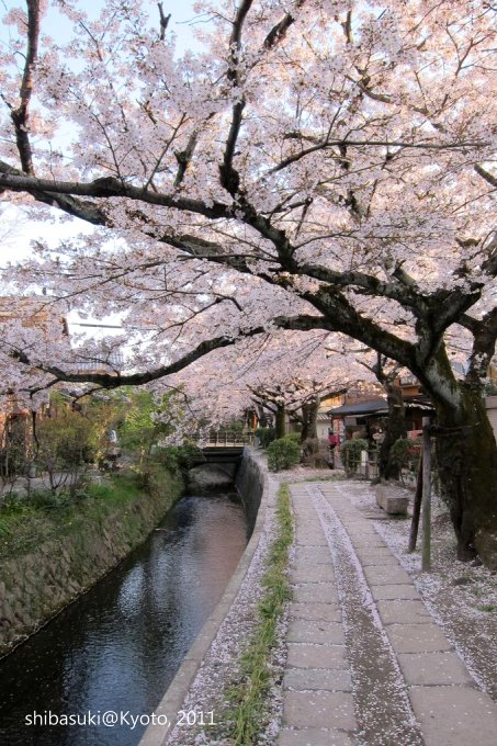 20110412_Kyoto-338_哲學之道_1.JPG