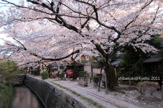 20110412_Kyoto-340_哲學之道_1.JPG