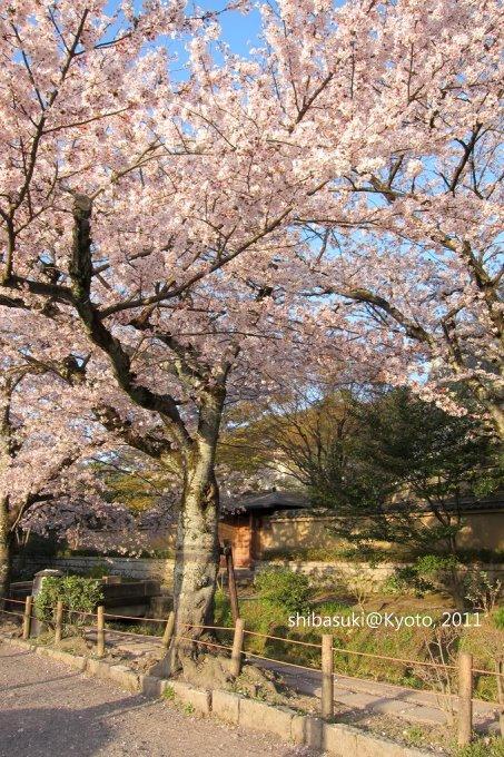 20110412_Kyoto-345_哲學之道_1.JPG