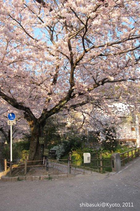 20110412_Kyoto-349_哲學之道_1.JPG