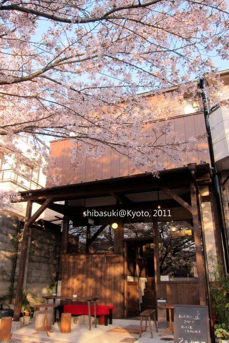 20110412_Kyoto-353_哲學之道_1.JPG