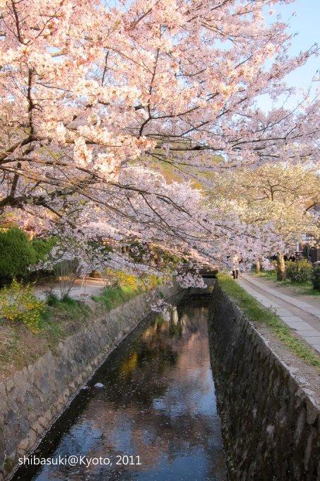 20110412_Kyoto-354_哲學之道_1.JPG