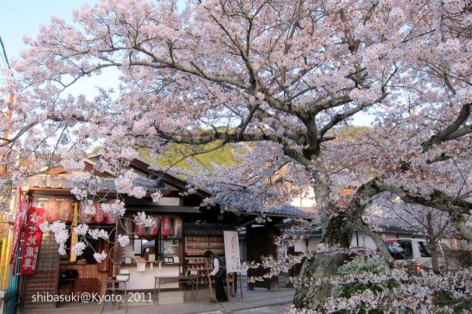20110412_Kyoto-356_哲學之道_1.JPG