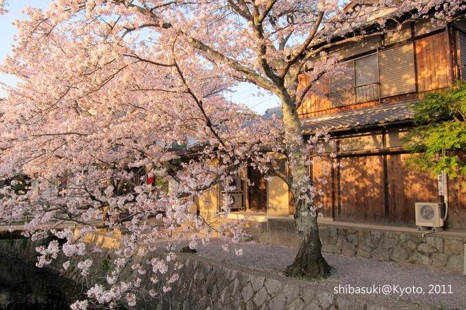 20110412_Kyoto-357_哲學之道_1.JPG